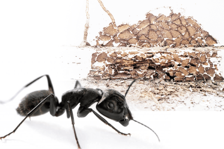 pest inspection for carpenter ants