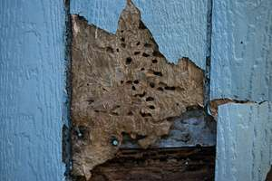 Termites and insect infestation