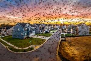 Read more about the article Termite Swarms Hit Pittsburgh Homes