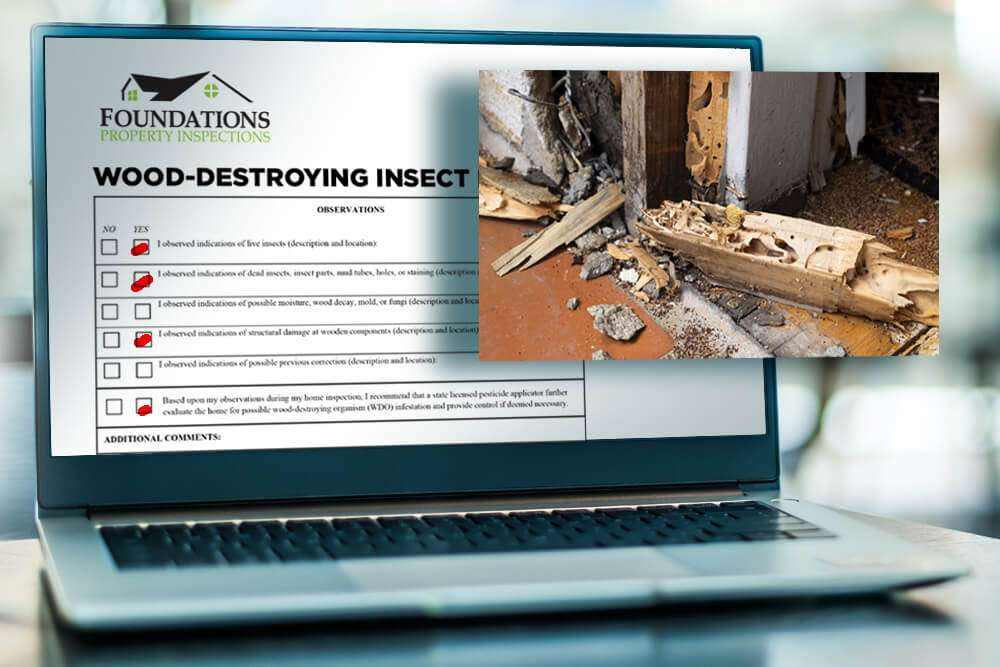 termite swarms pest inspection report